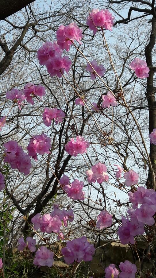 봄봄봄~~봄이 왔어요